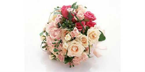 цветы чувствуют автор: мехди эбрагими вафа